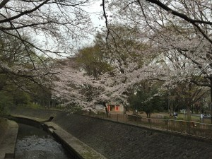 Wadabori Park 1